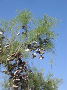 shoe tree close up in amboy