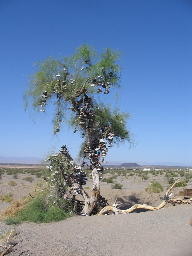shoetree in Amboy from Road
